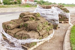 Wholesale Sod Suppliers